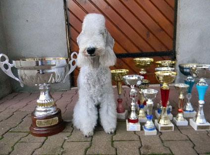 Podiums seconde saison d'Olga avec le trophée Meilleur terrier !