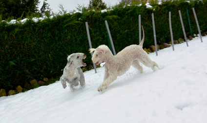 Olga, grrr dans la neige
