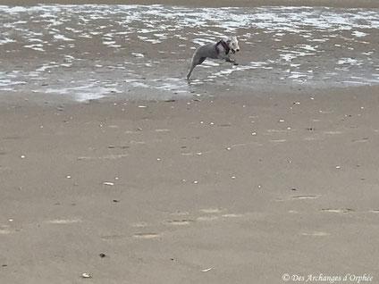 Premier contact avec la mer de la côte d'Opale pour R'mione