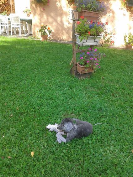 Le voici dans son nouveau jardin. Merci Eliane et Marie pour la photo.