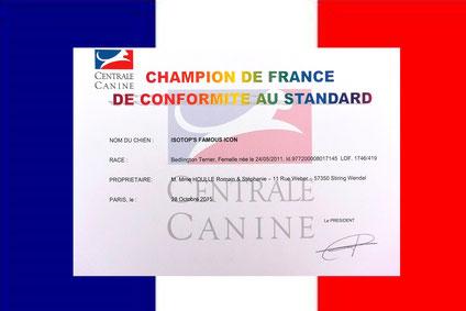 "ISOTOP'S Famous Icon ""Tsarine, Championne de France."