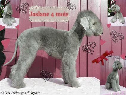 Cliquez sur le lien pour accéder aux photos de Jaslane.
