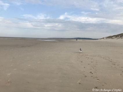 Olga revient de son escapade dans les dunes ...