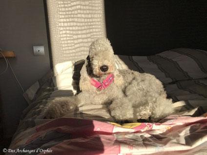 Olga savoure le lever du soleil