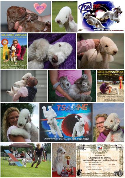 Cliquez sur l'image pour accéder aux photos de Tsarine. .