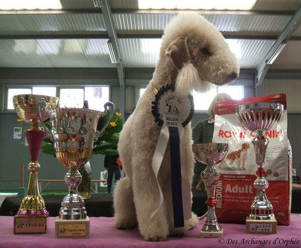 Tsarine obtient le BIS 2/best in show 2.