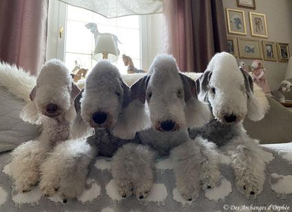 Tsarine, Olga, Jaslane & R'mione