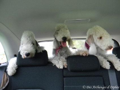 Le gang en route pour de nouvelles aventures !