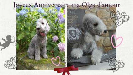 Cliquez sur la photo pour accéder à une des rubrique d'Olga ♥
