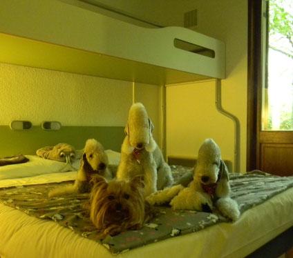 les Miss à l'hotel avant la NE