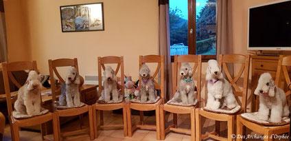 Tsarine, Olga, Jaslane, R'mione, Roméo, J'Altaïr et Estelle