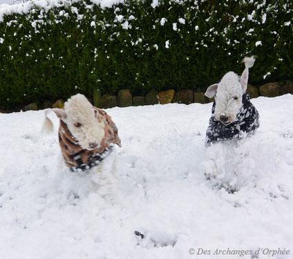 Cliquez sur la photo pour voir les miss dans la neige