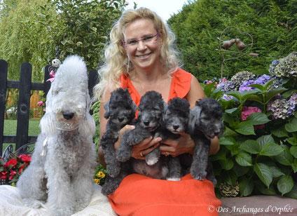 Les chiots d'Olga 8 semaines.