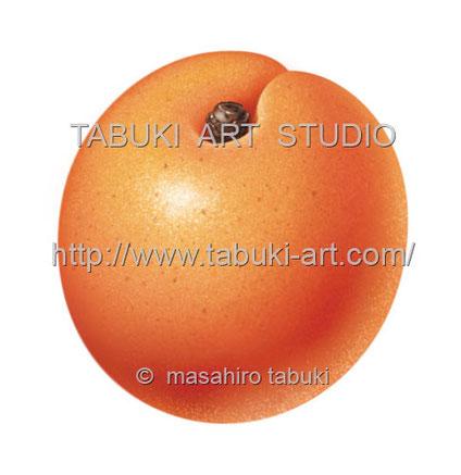 アプリコット apricot 杏 杏子イラスト