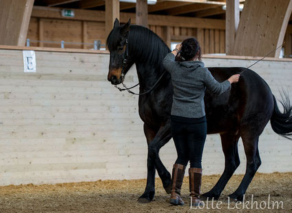 Especially when the exercises advance, the horse should show an attantive, but open face.