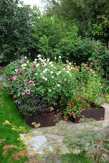 ddieartigeGARTEN // August Garden - high beds / Knie-Hochbeete - Spätsommerblüten
