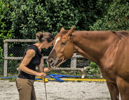 Freiarbeit mit dem Pferd, Reitunterricht, Beritt