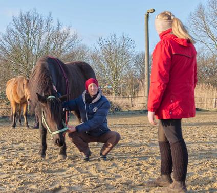 Seminare, Workshops Pferde Osteopathie