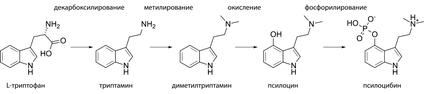 Синтез псилоцибина