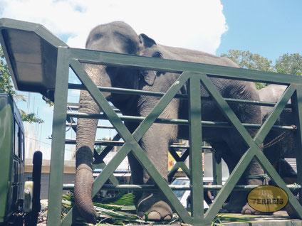 Elefant wird transportiert