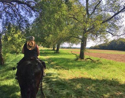Unterwegs auf schönen Wiesenwegen