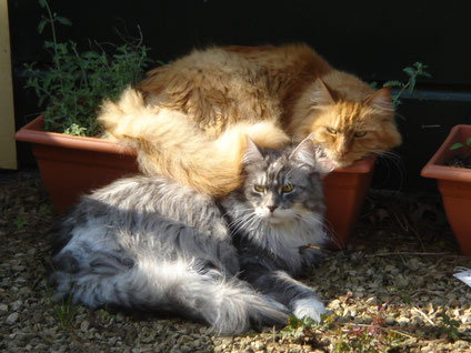 Kattenhotel, kattenpension, kattenkennel