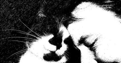 Bernd und seine Schmusekatze