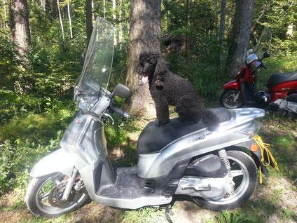 Super, nun bin ich Rollerfahrer geworden