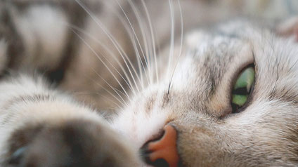 Anima-Balance   Tiertherapie Praxis für Pferde, Hunde & Katzen   Alternativmedizin   Komplementärmedizin   Reiki