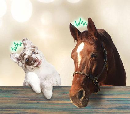 Anima-Balance | Tiertherapie Praxis | Komplementärmedizin | Bioresonanz | Pferd | Hund | Katze