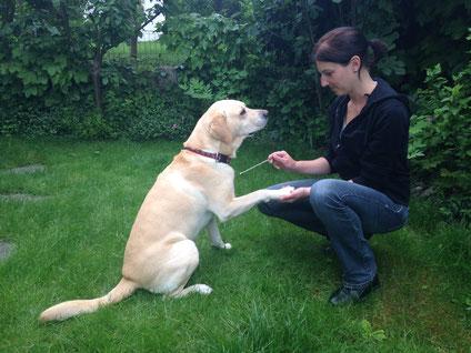 Anima-Balance | Tiertherapie Praxis für Pferde, Hunde und Katzen | Komplementärmedizin |Tierkinesiologie