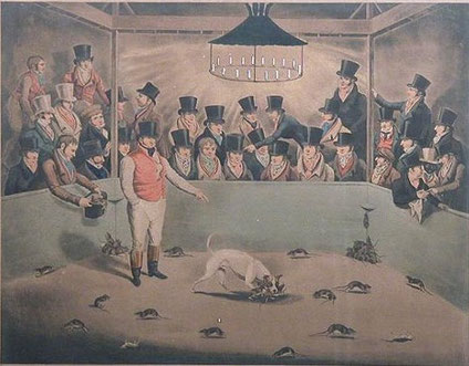 """Billy, the rat-killing terrier. Coloured engraving from The Kennel Club's Art Collection Catalogue.  With caption: """"The Phenomenon of the Canine Race, and Superior Vermin killer of his day having killed nearly 4,000 rats in about Seven Hours."""""""