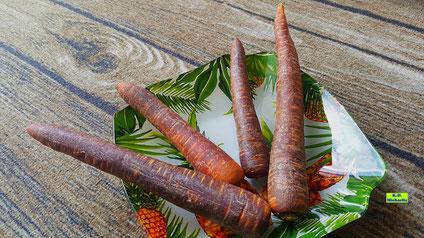Rohe Urmöhren / Urkarotten / Lila Möhren / Lila Karotten von K.D. Michaelis