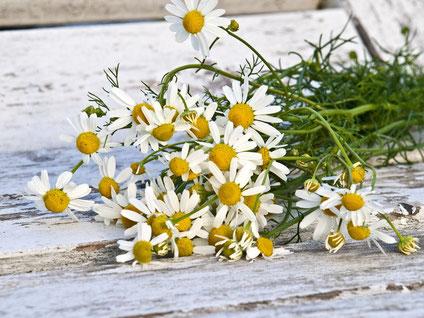 Kamille Blüte Strauß