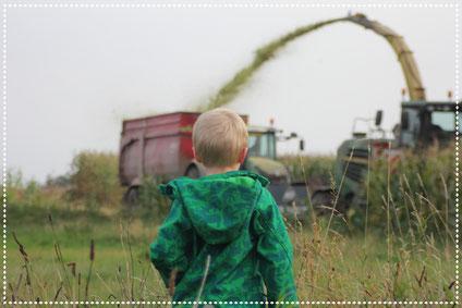 Junge Mähdrescher Traktor Maisernte