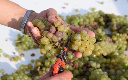 harvest-original-winemaker-box-Myriam-Fouasse-Robert-guided-wine-tours-tastings-Loire-Valley-vineyard-Vouvray-Touraine-Tours-Amboise-Rendez-Vous-dans-les-Vignes
