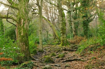 ドナードの森の中。日本の山を歩いているのとさして変わらない雰囲気を味わえます。