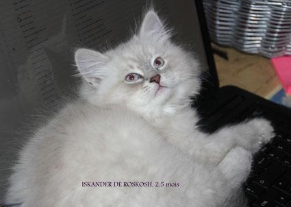 Le 24/11/2013: Iskander à 2.5 mois (merci à ma future maman Typhaine pour sa visite de si loin!!!)