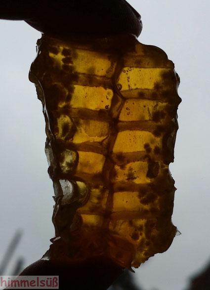 Flüssiges Gold - himmelsüßes Stück Honigwabe