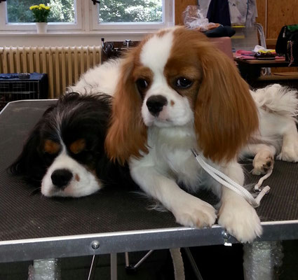 Babette mit Grace