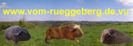 Hobby-Cuy-Zucht vom Rueggeberg
