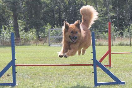 Leika fliegt über die Hürde
