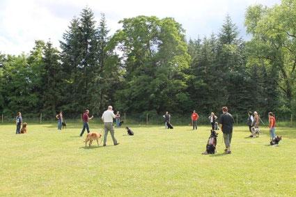 Kreisübung mit Hunden
