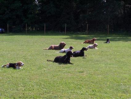 Hundegruppe mit Zora im Platz