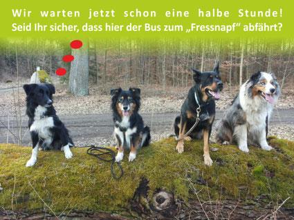 Border Collie, Schäferhund und Aussie sitzen auf Baumstamm