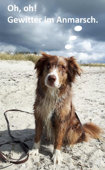 Australian Shepherd am Strand mit Gewitterwolke