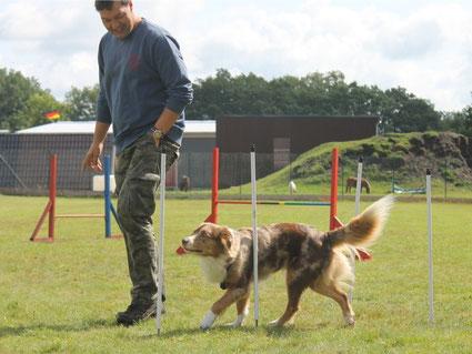 Mensch und Hund laufen Slalom beim Agility