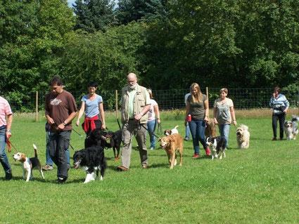 Menschengruppe mit Hunden bei Fuß gehen