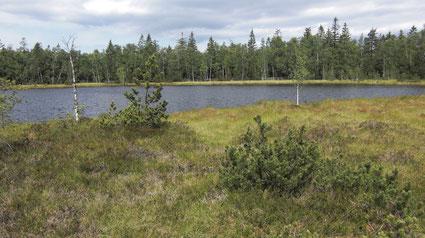 Wildseemoor bei Kaltenbronn