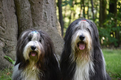 Honden workshop leuke diingen doen met je hond hondentraining waalwijk en omgeving nieuwkuijk